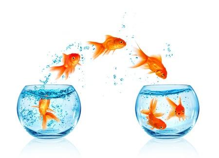 Goldfish Jumping Bowls