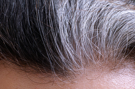 54629897 - going gray. woman gray and black hair roots. close-up.